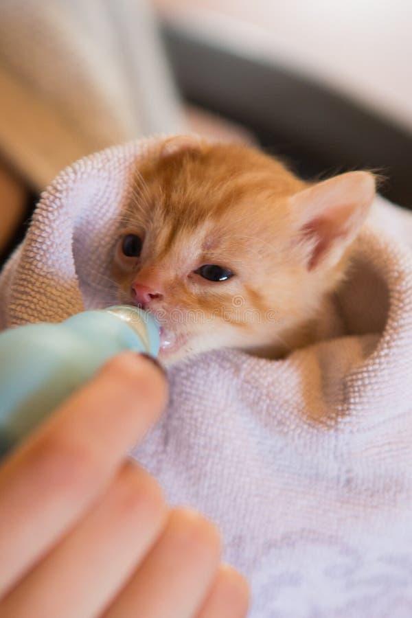 Het uiterst kleine rode katje die handfed zijn royalty-vrije stock afbeeldingen