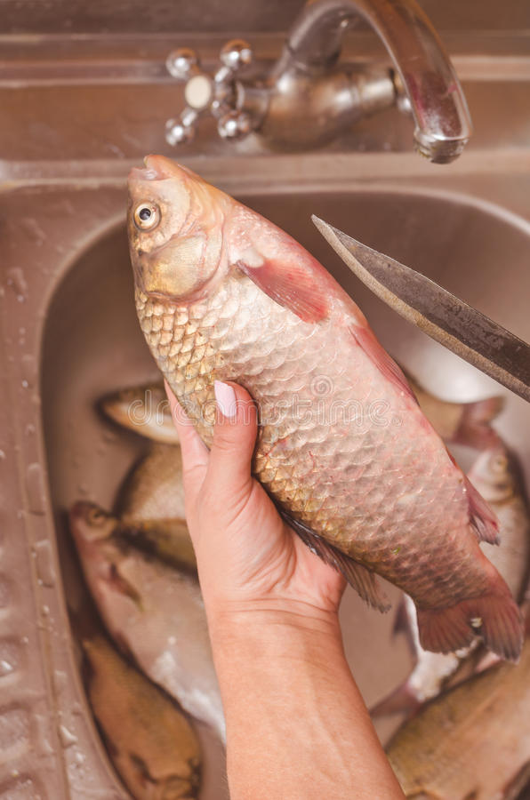 Het uithalen en het schoonmaken van vissen over de gootsteen stock foto