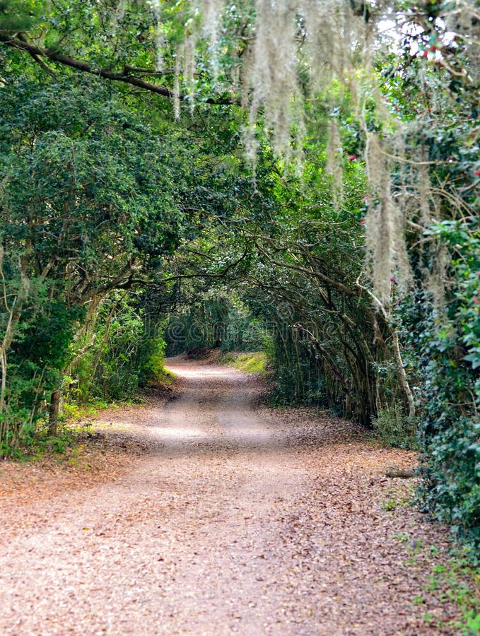 Het uitnodigen grintweg door een tunnel van weelderig groen en Spaans mos stock fotografie