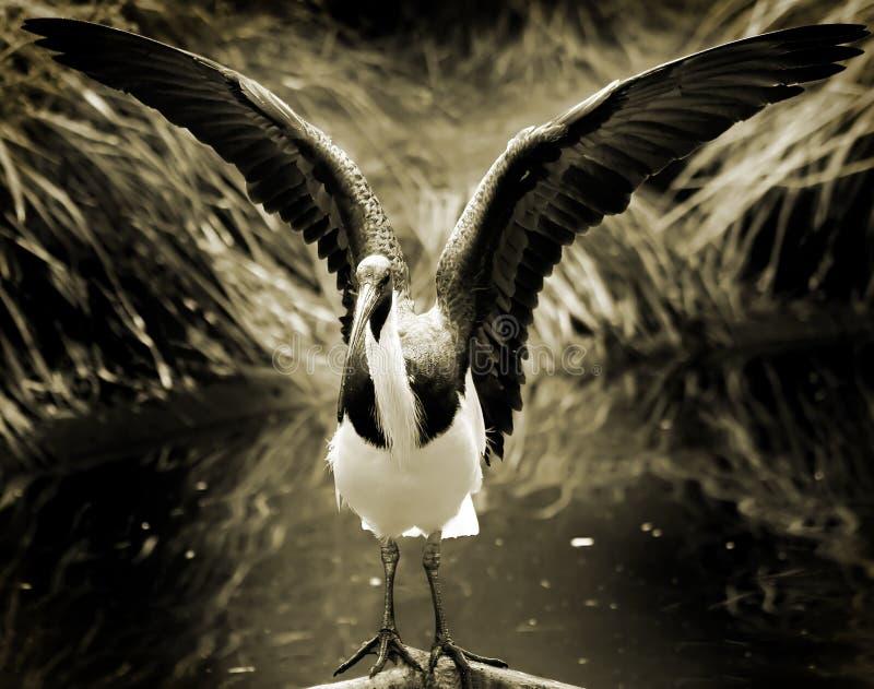 Het uitrekken zich vogel royalty-vrije stock afbeelding