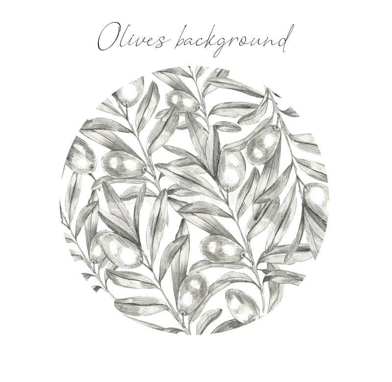 Het uitstekende geïsoleerde embleem van de olijfboominstallatie vector illustratie
