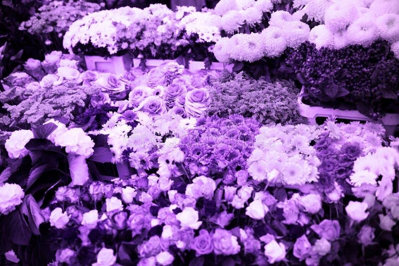 Het ultraviolet bloeit achtergrond van de tendenskleur stock foto