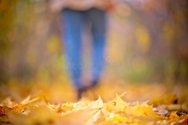 Het vage meisje in jeans en laarzen loopt in de vrouwen van de herfstbenen van de bosunfocused in de Indische zomer stock afbeelding