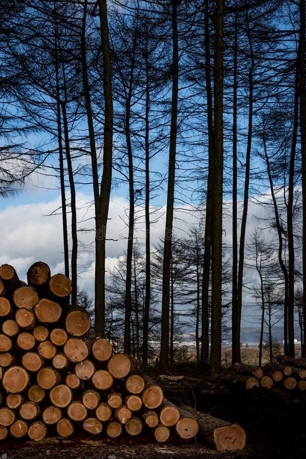 Het vallen, het felling opent bos, met stapel van gesneden logboeken en rand van hout het programma stock afbeeldingen