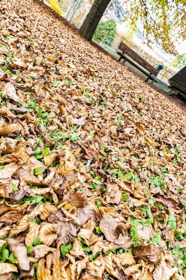 Het vallen op een bed van bladeren stock afbeeldingen