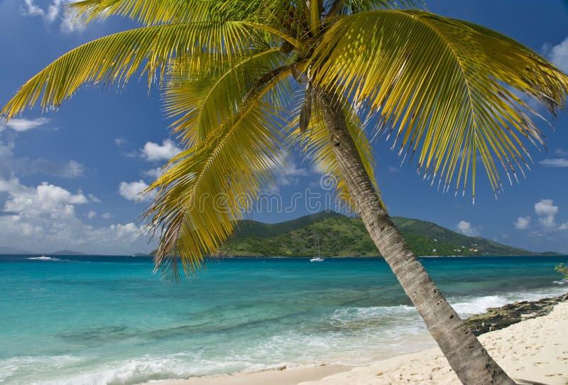 Het Varen van de Palm van het eiland stock afbeelding