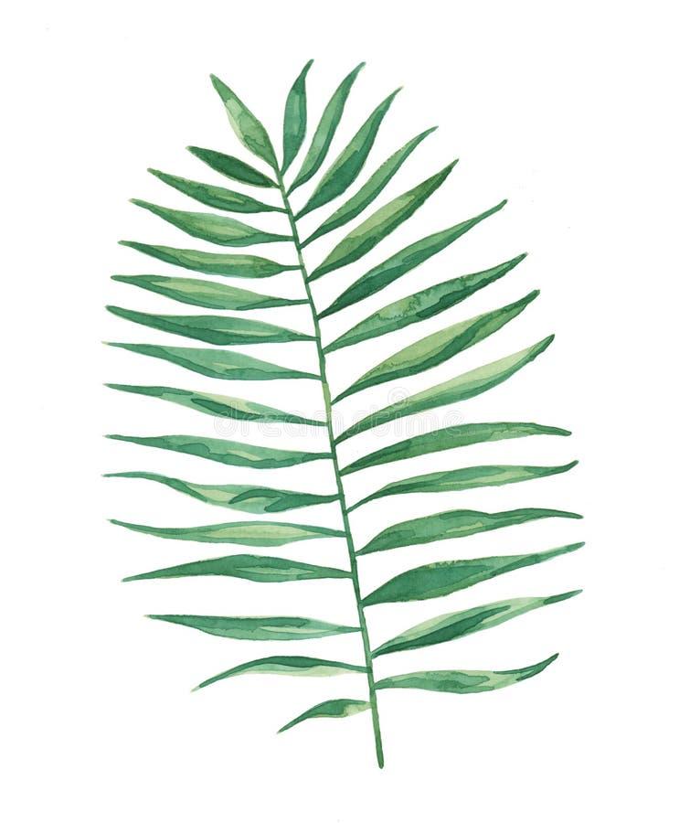 Het Varenbladbladeren van de waterverf het Tropische Palm Schilderen stock illustratie