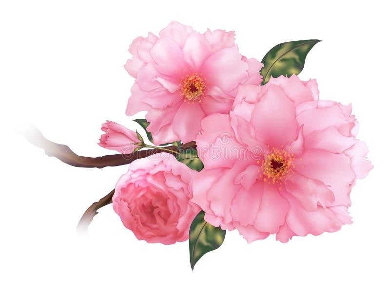 Het vector 3D realistische roze van de de bloemtak van kersensakura digitale art. vector illustratie