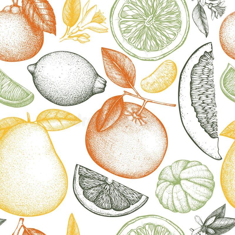 Het vector naadloze patroon met inkthand getrokken citrusvruchten, de bloemen, de plak en de bladeren schetsen Uitstekende achter stock illustratie