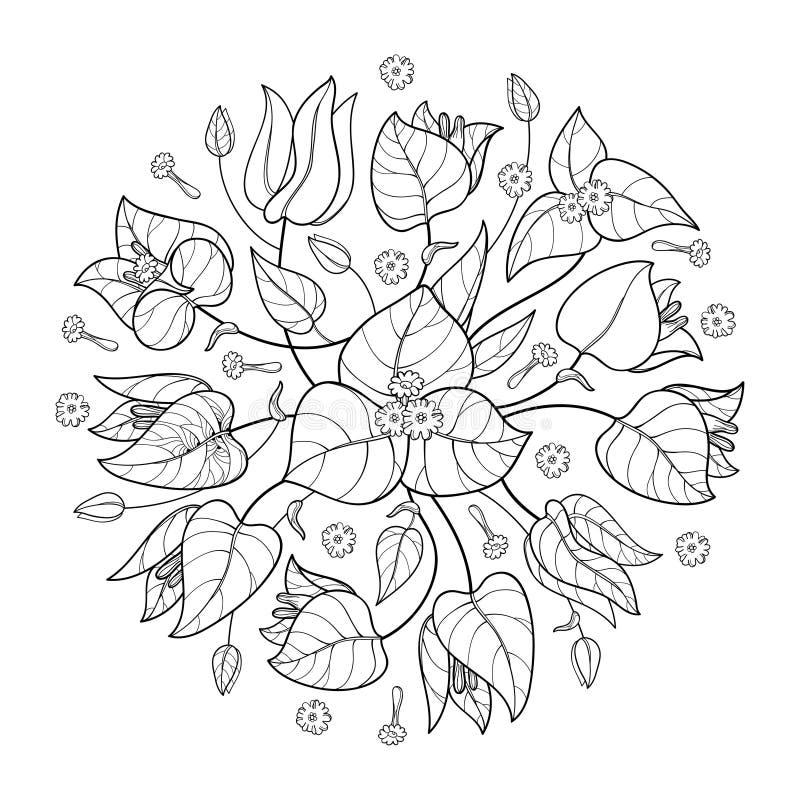 Het vector ronde die boeket van overzichtsbougainvillea of Buganvilla-de bloem bundelt met knop en blad in zwarte op witte achter vector illustratie