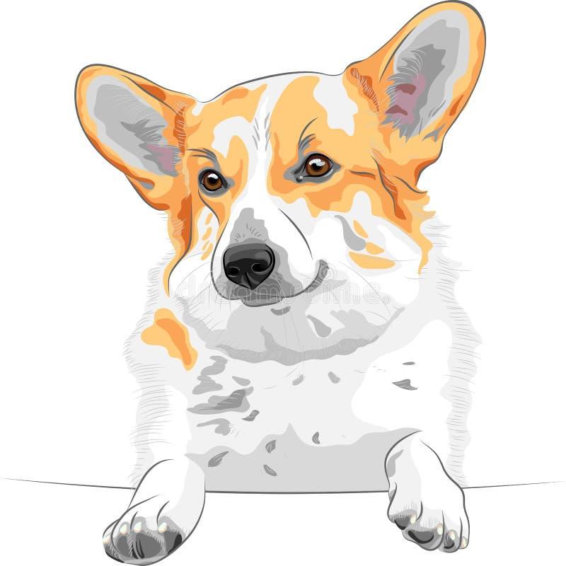 het vector van de hondPembroke van de Schets Welse corgi glimlachen vector illustratie