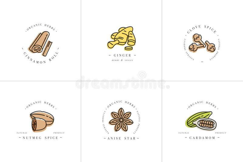Het vector vastgestelde embleem en de emblemen van ontwerp kleurrijke malplaatjes - kruiden en kruiden Verschillend kruidenpictog royalty-vrije illustratie