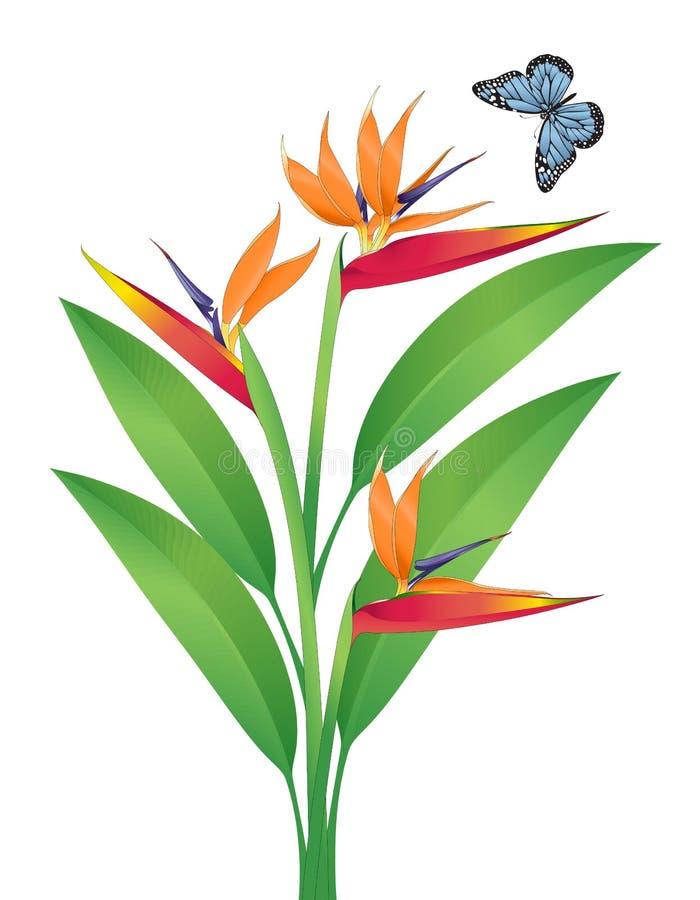 Het VectorArt. van de paradijsvogel stock illustratie