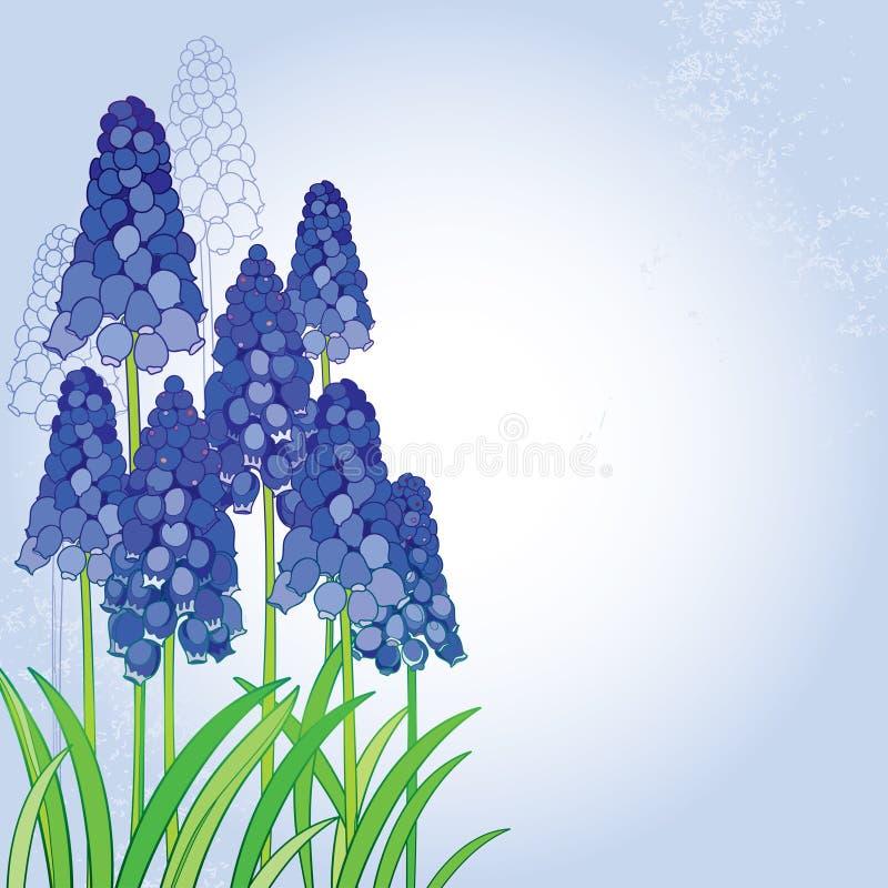 Het vectorboeket met overzichts blauwe muscari of druivenhyacint bloeit en groene bladeren op de pastelkleurrug De lente bloemene royalty-vrije illustratie