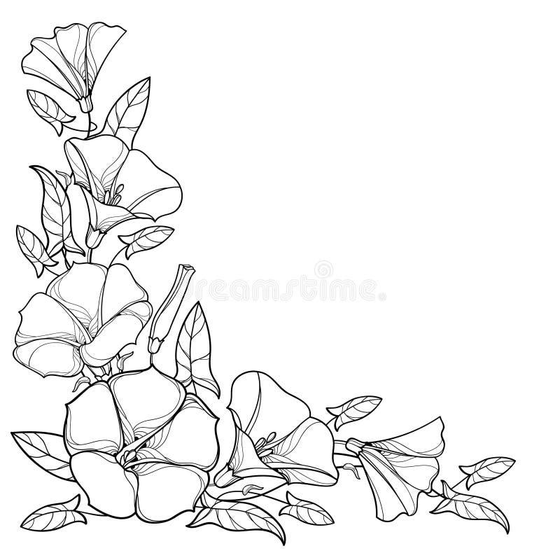 Het vectordiehoekboeket met overzichtswinde of de Winde bloeit klok, blad en knop in zwarte op witte achtergrond wordt geïsoleerd vector illustratie