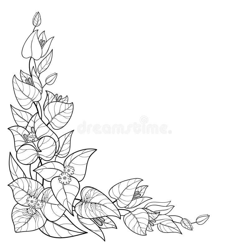 Het vectorhoekboeket van overzichtsbougainvillea of Buganvilla-de bloem bundelt met knop en blad in zwarte die op witte achtergro stock illustratie