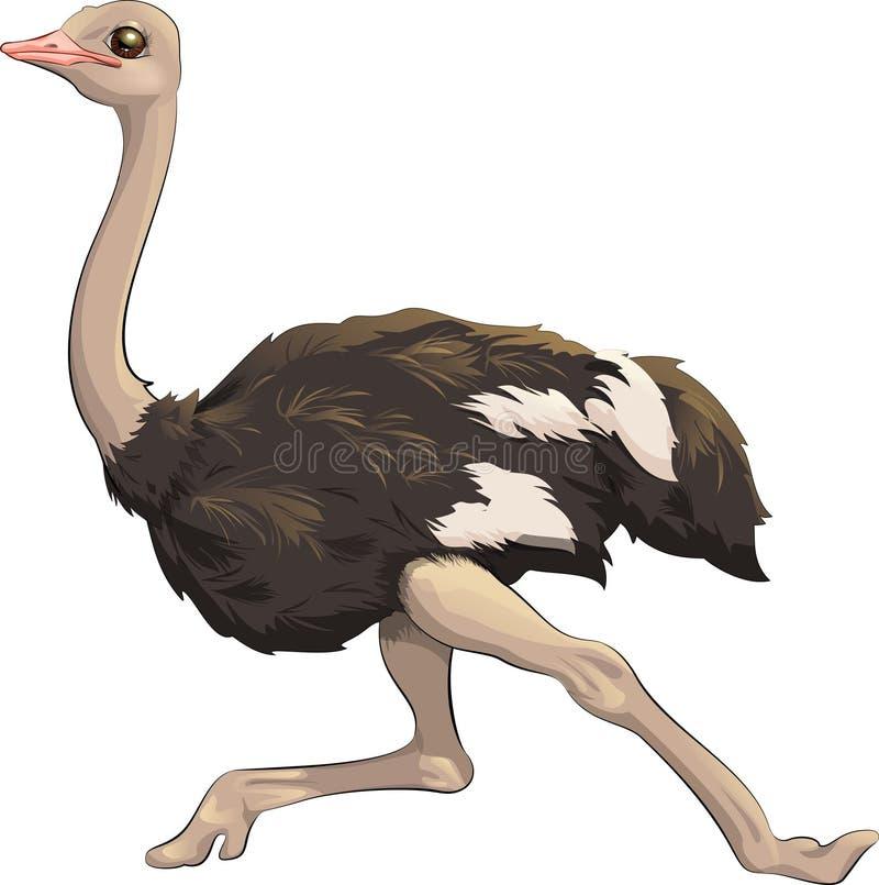 Het vectorillustratiestruisvogel snelle lopen vector illustratie