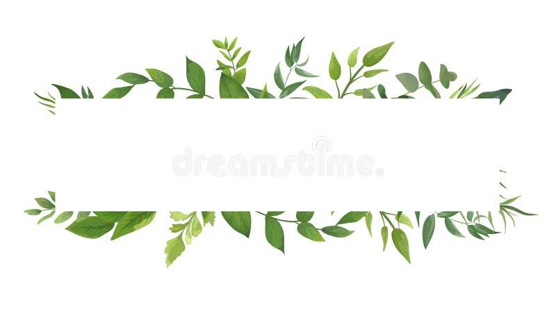 Het vectorkaartontwerp met groene varen verlaat elegant groen eucal