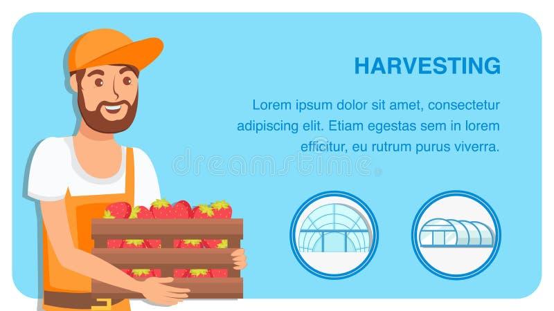 Het Vectormalplaatje van Berry Harvesting Web Banner Flat royalty-vrije illustratie