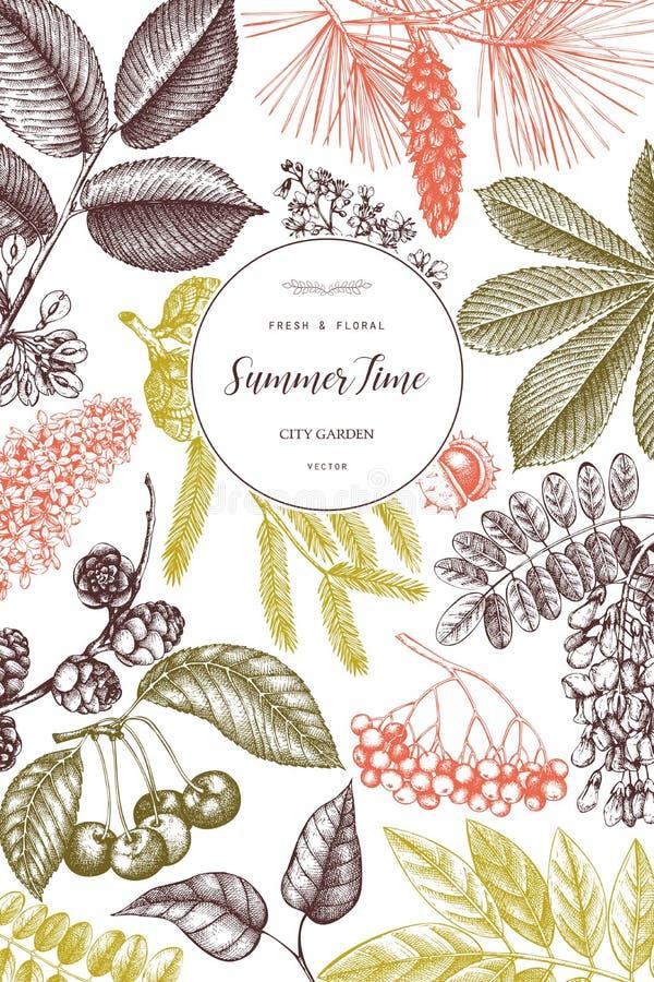 Het vectorontwerp met hand getrokken tak, bladeren, zaden, kegels, vruchten schetst Uitstekend kader met botanische elementen Ret royalty-vrije illustratie