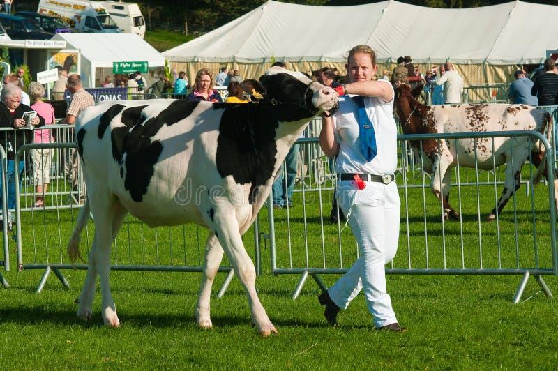 Het vee toont royalty-vrije stock afbeelding