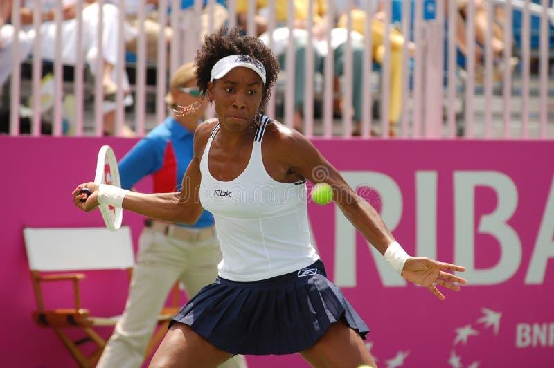Het Venus van Williams - grote kampioen (7) stock afbeeldingen