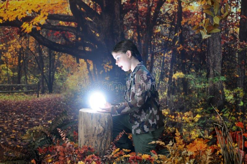 Het verbazen vindt in Autumn Woods stock foto
