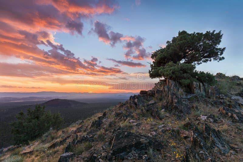 Het verbazende boom voortkomen uit de rots bij zonsondergang Kleurrijk landschap met oude boom met groene bladeren, bergen en hem stock foto's