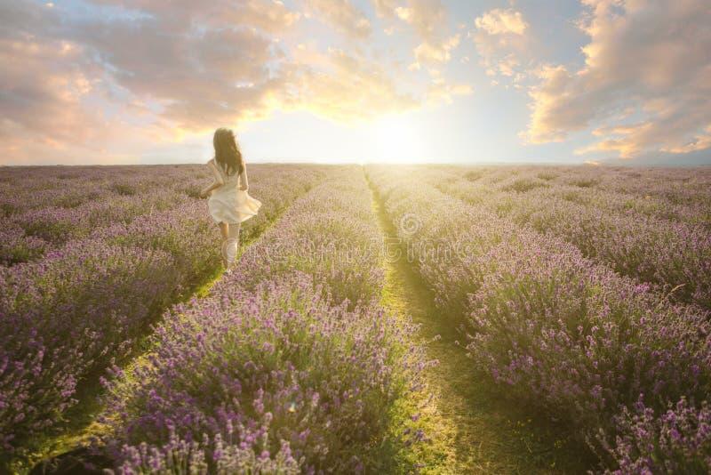 Het verbazende landschap van het lavendelgebied royalty-vrije stock afbeeldingen
