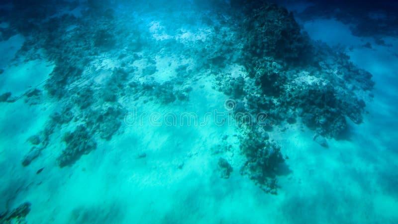 Het verbazende onderwaterschot van zandige overzeese bodem met het kweken van kleurrijke koraalriffen en het zwemmen vist royalty-vrije stock foto