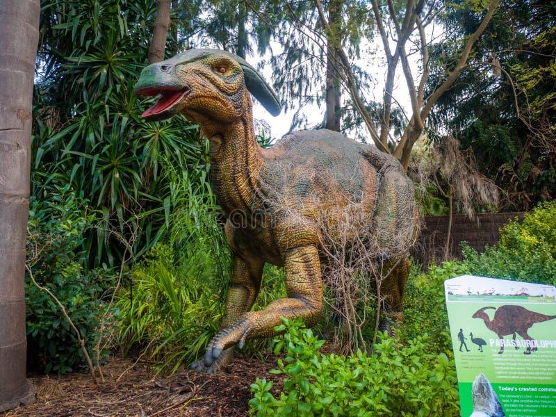 Het verbergen in een de vertoningsmodel van struikparasaurolophus in de Dierentuin van Perth stock foto's