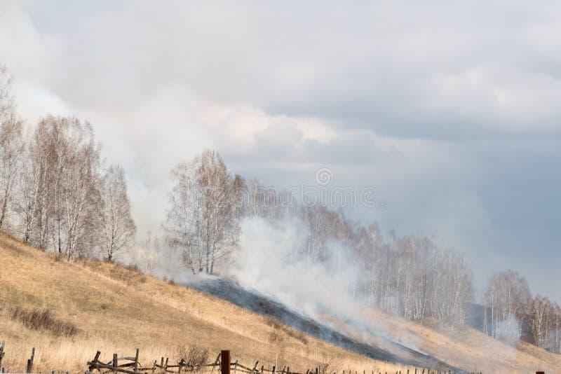 Het verbranden van droog gras en berkengaard door de nalatigheid van de mensen in het voorjaar royalty-vrije stock afbeeldingen