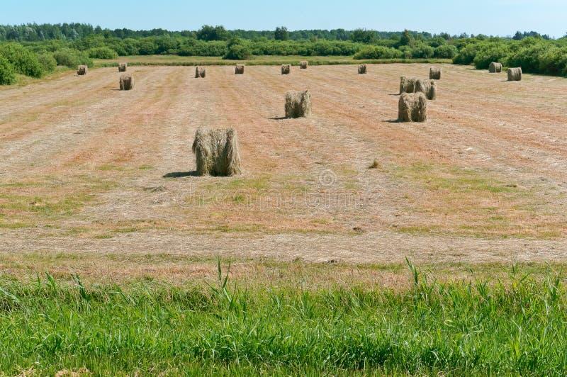Het verdraaide hooi op het gebied, bundels van hooi rolt op de landbouwgrond royalty-vrije stock foto's