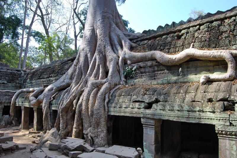 Het verdubbelen van wortels. De tempel van Ta Prohm royalty-vrije stock foto