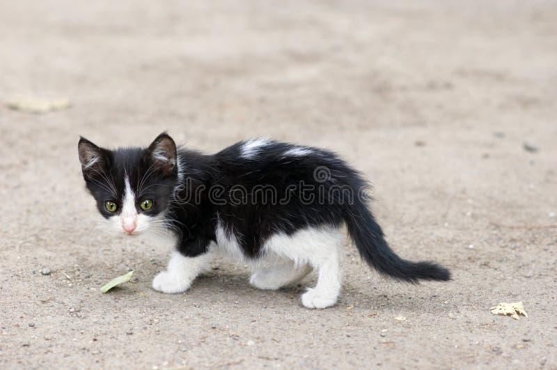 Het verdwaalde katje lopen stock foto's
