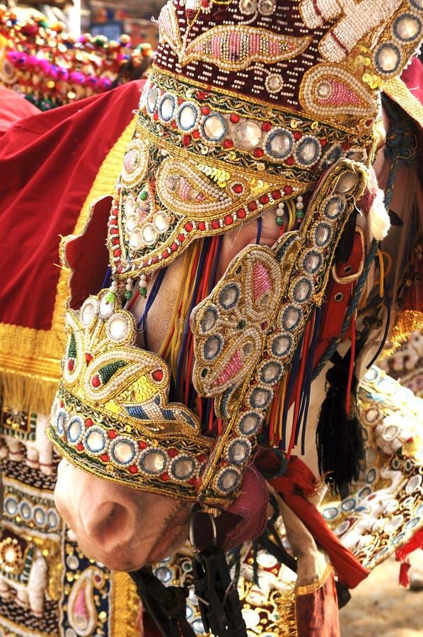 Het verfraaide paard van India Jaipur voor een huwelijk stock foto