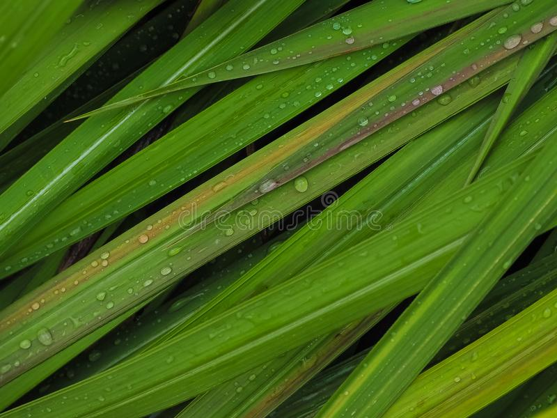 Het verfrissen zich in het regenachtige seizoen stock foto