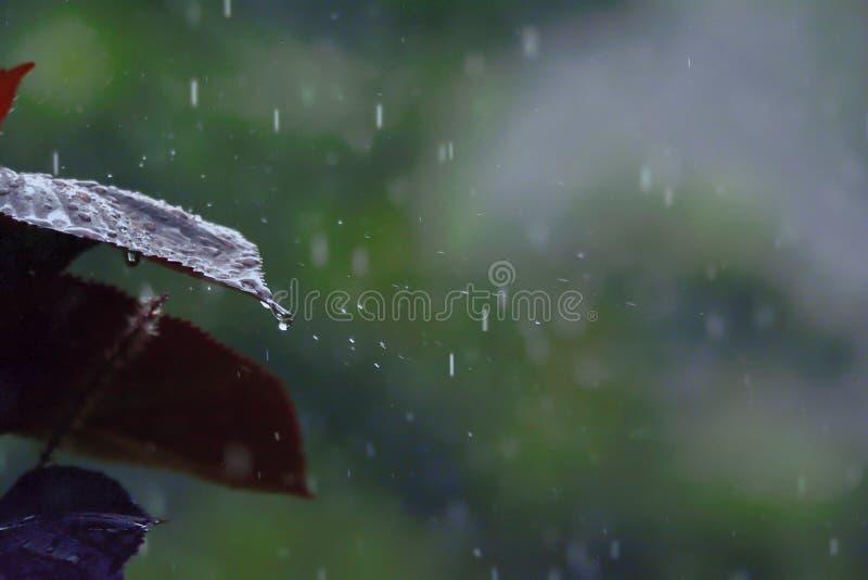 Het verfrissen zich - Rood blad op een regenachtige dag stock foto