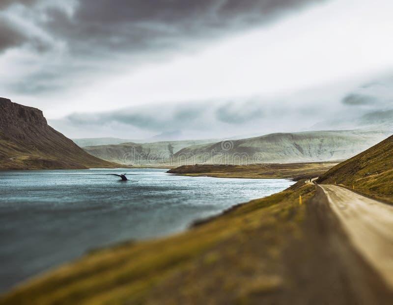 Het verhaal van de feewalvis van IJsland stock afbeeldingen