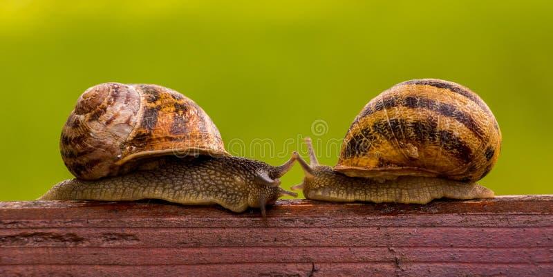 Het verhaal van twee slakken Vergadering stock afbeeldingen