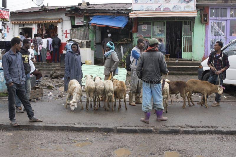 Het verkopen vee in Addis Ababa royalty-vrije stock foto