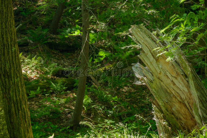 Het verlichten van geslagen boomboomstam bij de rand van een weelderig bos stock fotografie