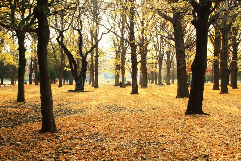 Het verlof van de herfst in Japan stock afbeelding