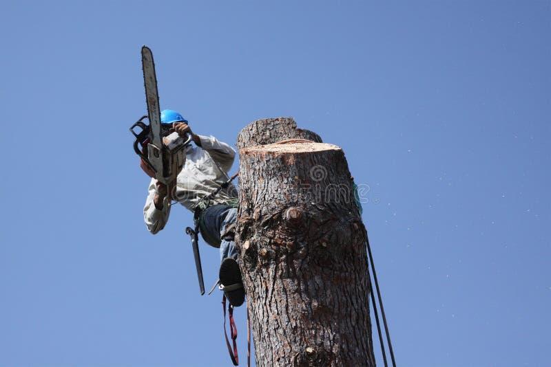 Het verminderen van een pinetree royalty-vrije stock afbeeldingen