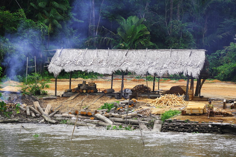 Het verminderen van het Regenwoud royalty-vrije stock foto