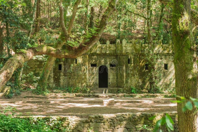 Het verrukte bos van Aldan stock fotografie