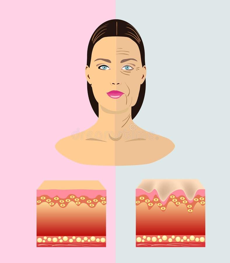 Het verschil tussen jonge en oude huid, vectorillustratie royalty-vrije illustratie