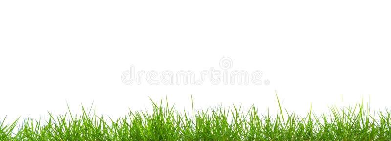 Het verse geïsoleerde panorama van het de lente groene gras royalty-vrije stock fotografie