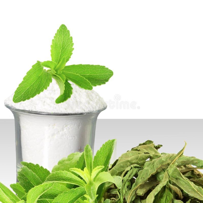 Het verse groene en droge poeder van Stevia en van het uittreksel op witte achtergrond royalty-vrije stock afbeeldingen