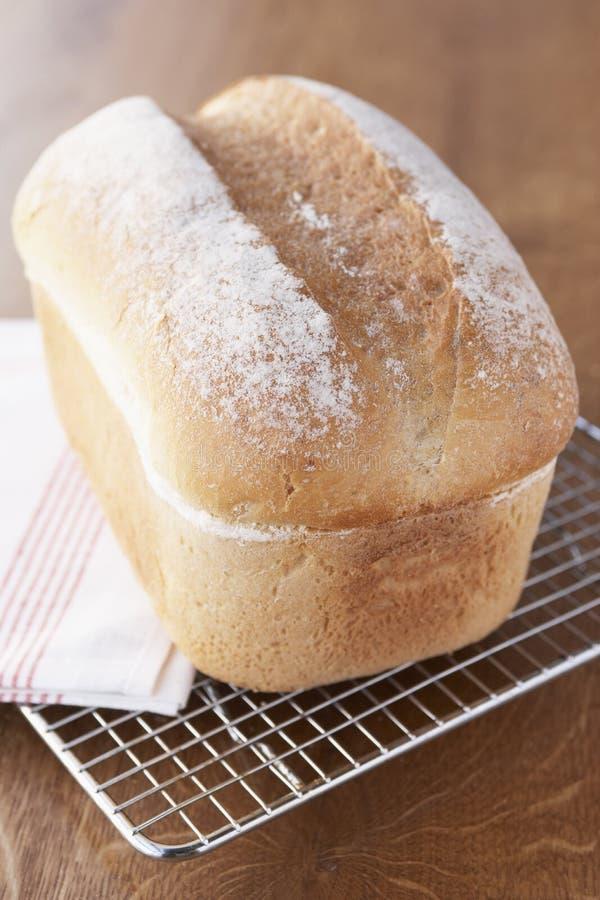 Het verse Koelen van het Brood op het Rek van de Draad royalty-vrije stock fotografie